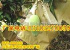 凯祥牌芒果果袋机能生产什么袋子?