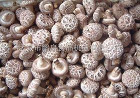 茶树菇气泡清洗机金针菇清洗设备