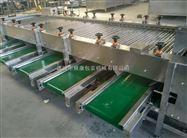 舜康定做1200蔬菜加工设备蒜米分级机
